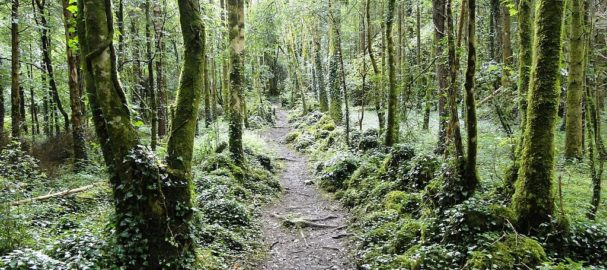 Dromore_Wood_path_BIG